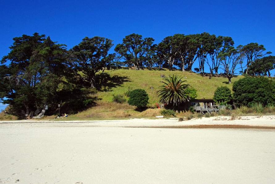 Sand, sky and trees at Pakiri.