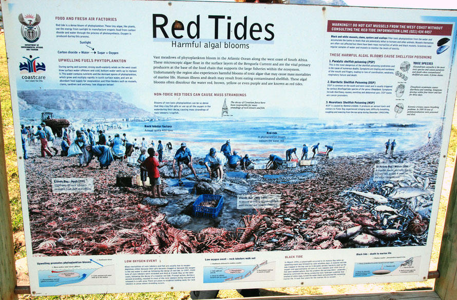Red Tides: public information point at Scarborough on the west side of the Cape Peninsula Fergus Murray