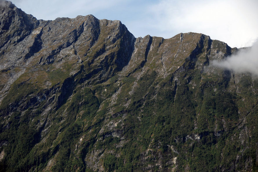 The denuded ridge top to the south of Mills Peak showing ice sheet erosion picking out weaknesses in the Milford Sound orthogneisses.