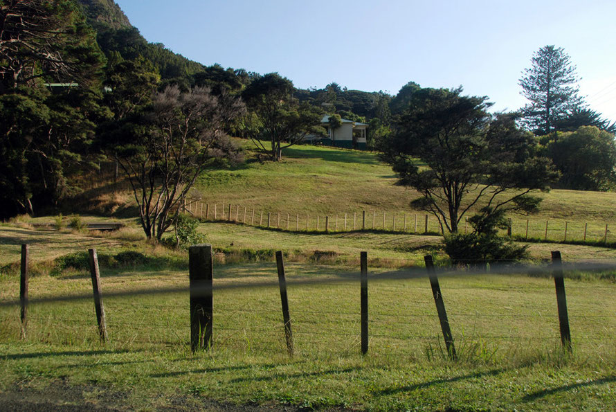 The road skirts, beautiful, tranquil Huia Bay and cuts inland at Kaiteke Point rising through neatly fenced paddocks with solitary Kanuka trees and the enclosing bush.