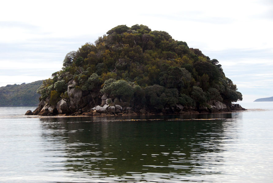 An islet off Sydney Cove on Ulva Island cloaked in Inaka (Dracophyllum longifolium) and Olearia (Stewart Island).