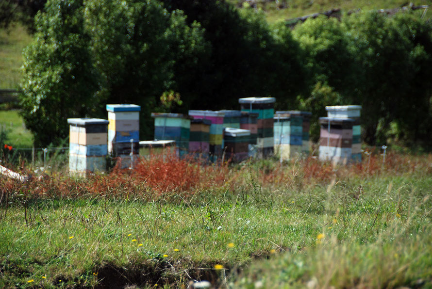 Brightly coloured beehives (sadly out of focus) at the start of the Wainui Falls walk near Pohara.