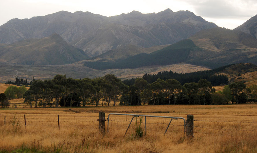 Valley flats of toasted grasses and stark strips of planted pines near the Waiau valley, Southland.