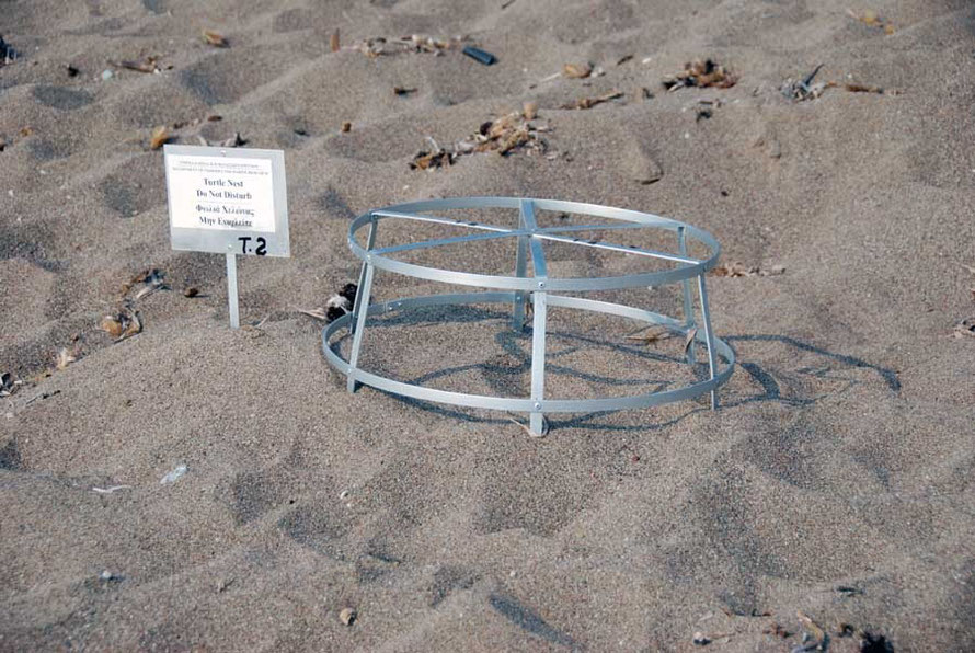 Akamas in June: turtle nest guard.