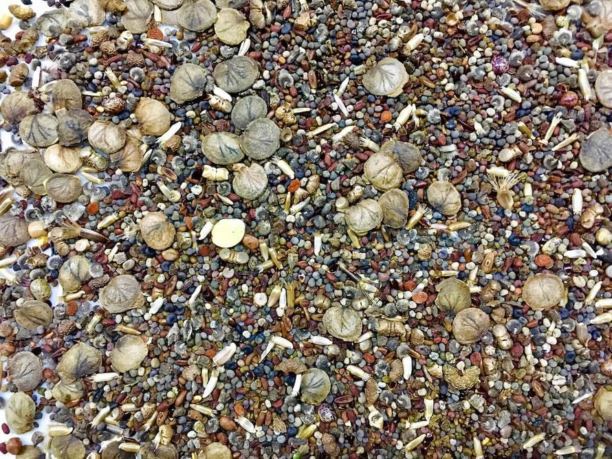 Über 20 verschiedene Saaten, bunte Vielfalt für viele Nachtfalter. Ein Bild von naturgeflatter.