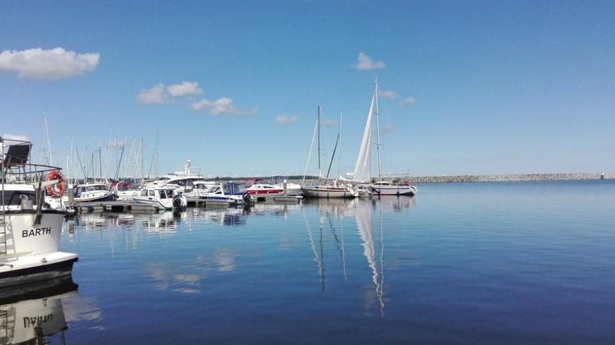 Der Hafen von Barhöft - wunderschöne Nachmittagsstimmung, aber viel zu viele Mücken :-)