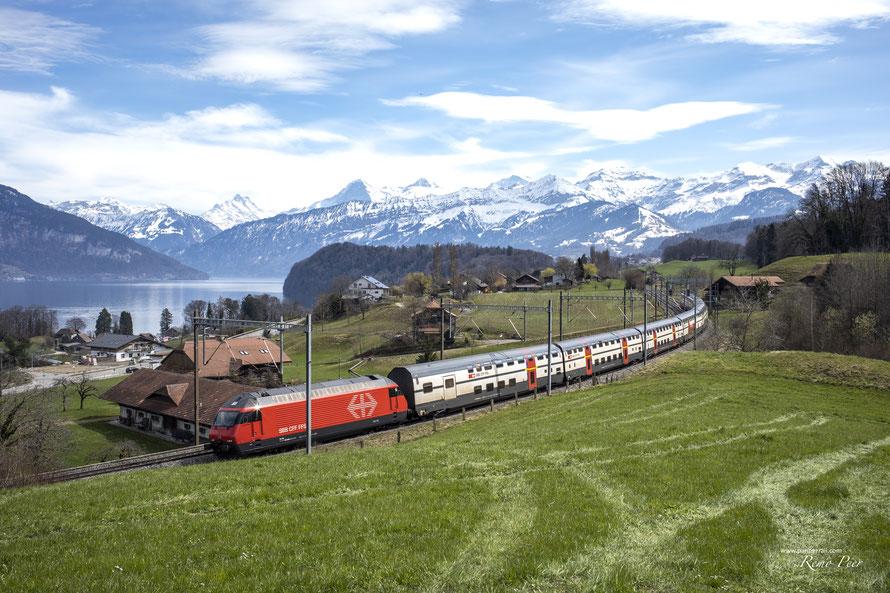 SBB Re 460 zwischen Spiez und Einigen mit IC2000 Dosto
