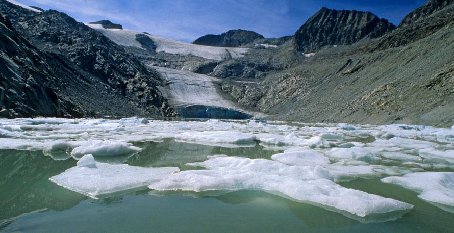 Der Pisganagletscher kalbt in den jungen Eissee, Adamellogruppe, © Rosenwirth