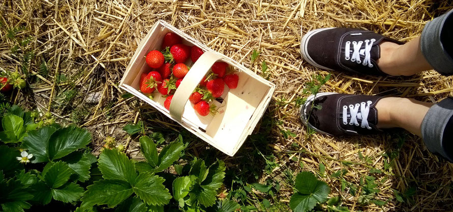 Alltagsabenteurer Alltagsabenteuer Erdbeeren selber pflücken Erdbeerfeld Körbchen Glantz Freizeit Vans Schuhe
