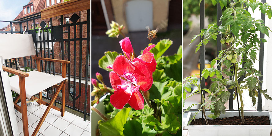 Balkon Urlaub auf Balkonien Kaffee Geranien Urban Gardening Tomaten Tomatenpflanze Biene Freizeit Outdoor Microadventure Alltagsabenteurer Alltagsabenteuer Mikroabenteuer