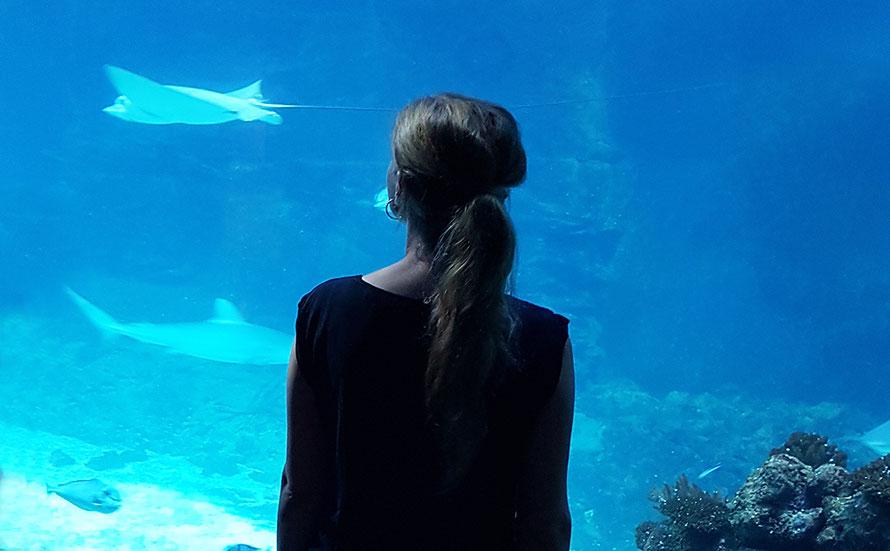 Tropenaquarium Aquarium Hagenbecks Tierpark Hamburg Freizeit Freizeittipp Rochen Fische indoor Alltagsabenteuer Alltagsabenteurer