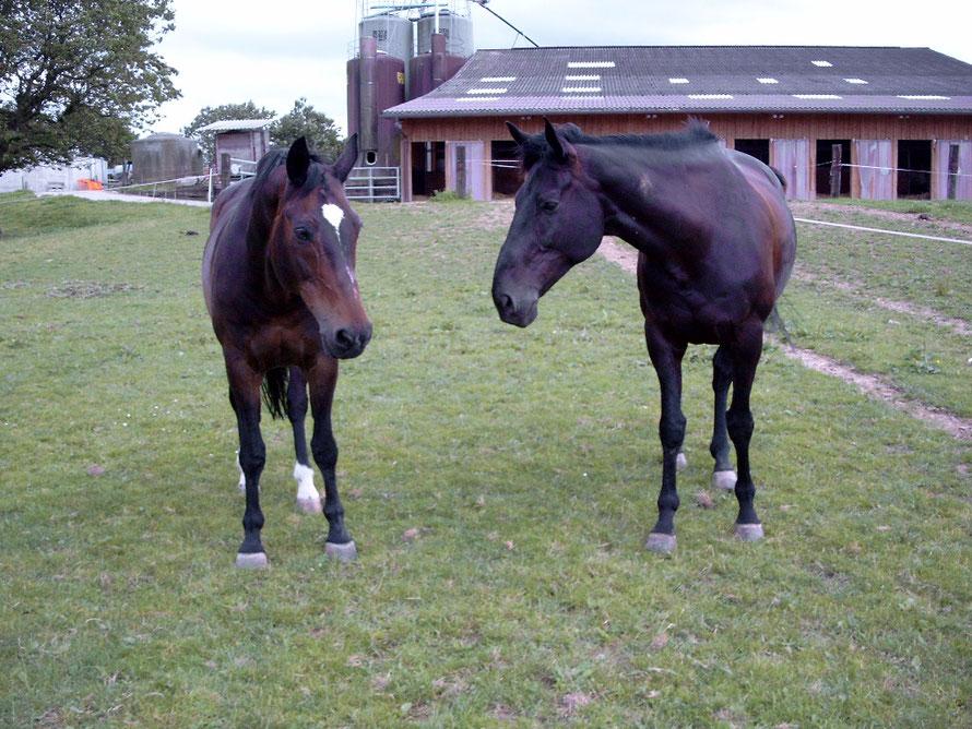 Guinness mit seinem Freund Gitan 2002 auf der Weide im Lärchenhof, Möhlin