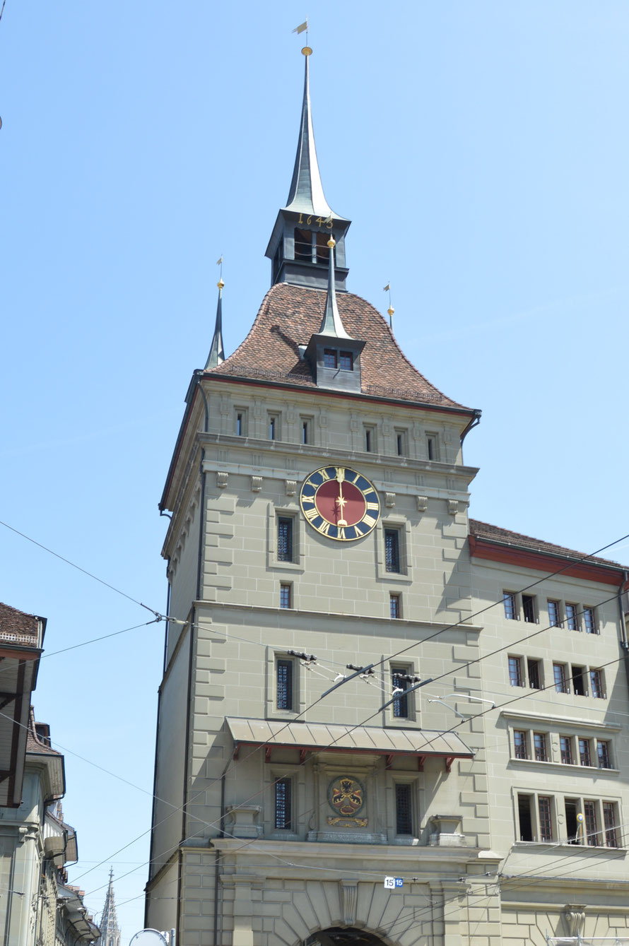 und hier das Nest der Kohlmeise