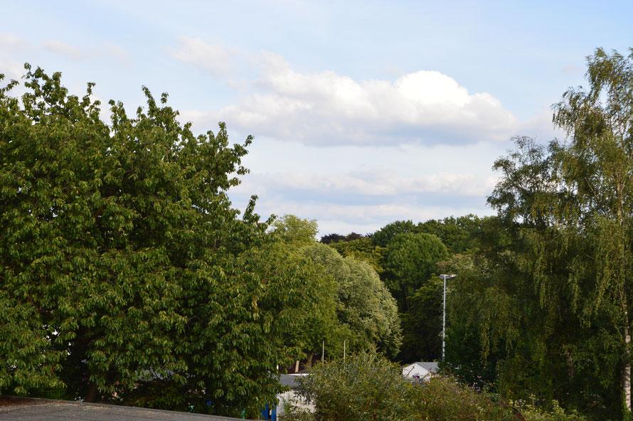 Blick aus unserem Hotelfenster ins Grüne