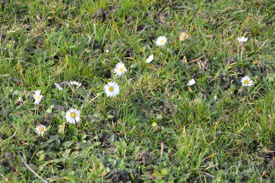 Der Frühling ist im Anmarsch.