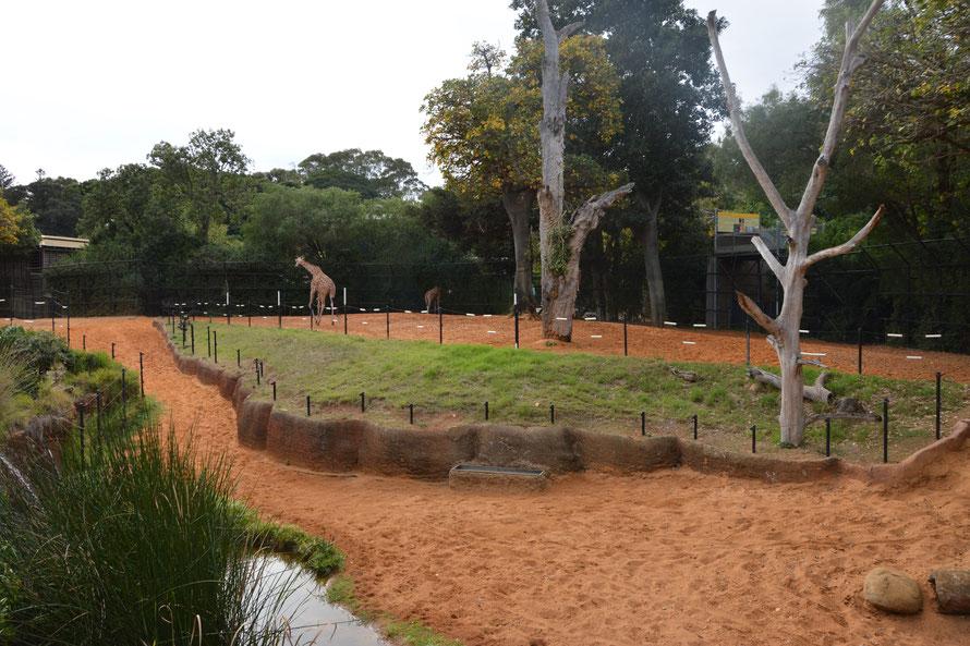 Hie das Giraffengehege