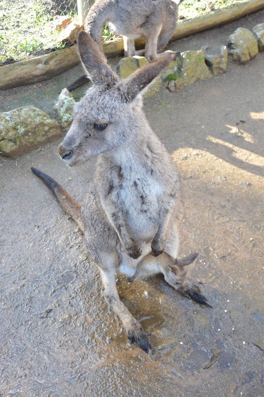 Kanguruh-mutti mit Baby