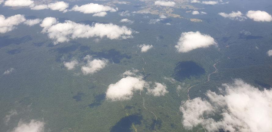 Die Landschaft verändert sich: Regenwald