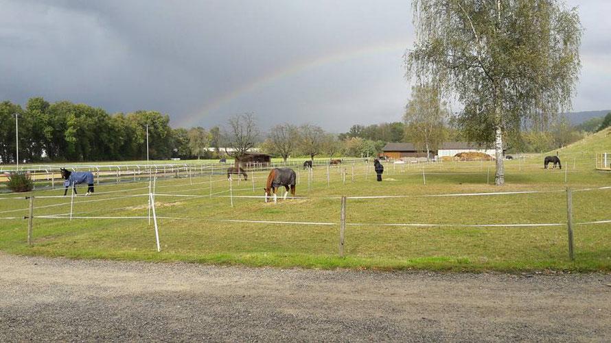 Diese Bild habe ich vom Facebook-account der Stallbesitzerin entwendet - Sie hat dieses tolle Foto mit dem Regenbogen gestern geschossen - wunderschön.