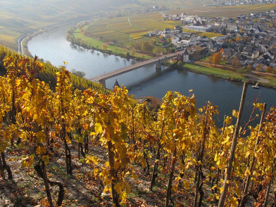 Sicht von der Trittenheimer Apotheke auf den Weinort Trittenheim