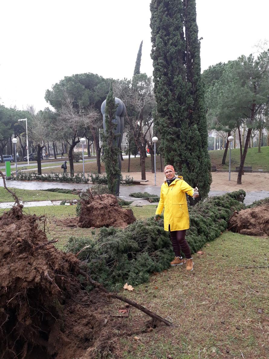 """Шторм """"Глория"""" в Барселоне. Поваленные деревья."""