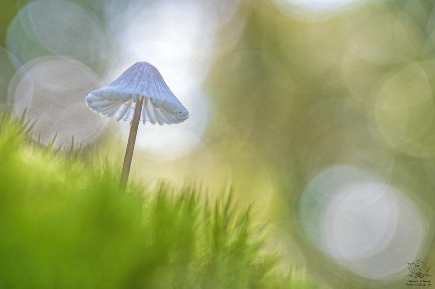 Oktober 2021 - Pilz im Wald bei Gegenlicht