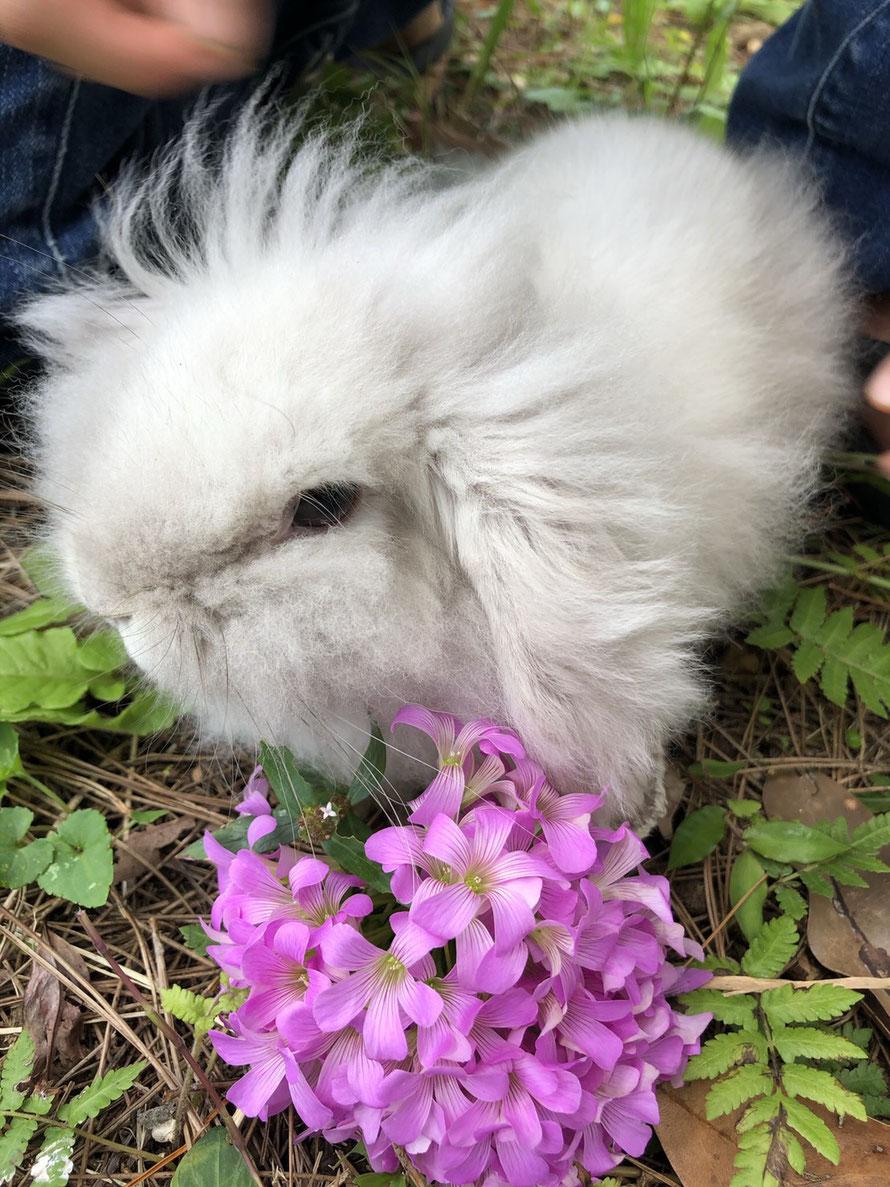 知人の家の島ウサギ もふちゃん