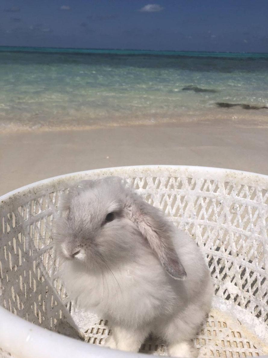 島ウサギもふちゃんは、漂流してきたカゴに入り込んで決め顔をしています。よく見てみると、確かに漂流の形跡があるカゴです。言われないと気付きませんでした。嵐について考えているのかな?