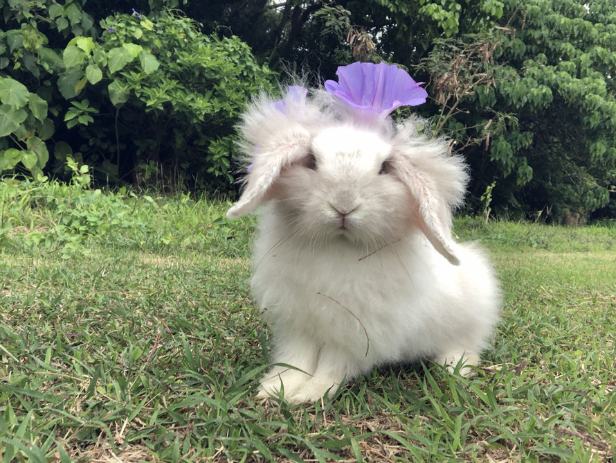 島ウサギのもふちゃん