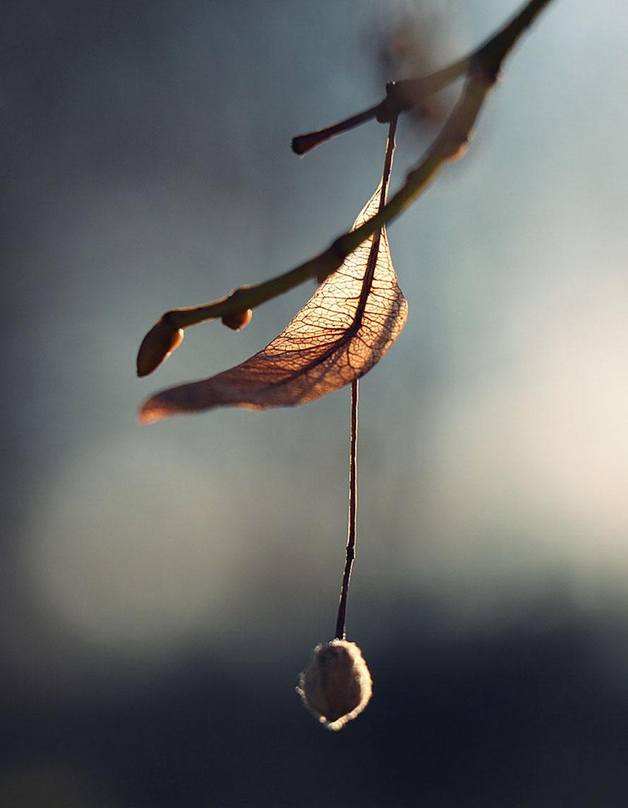 """autumn II"""