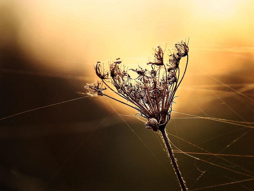 """slender autumn beauty"""