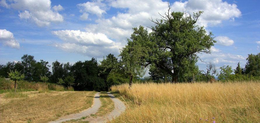 Wanderung über die Bruchsaler Hügel | Foto (c) Dieter Müller