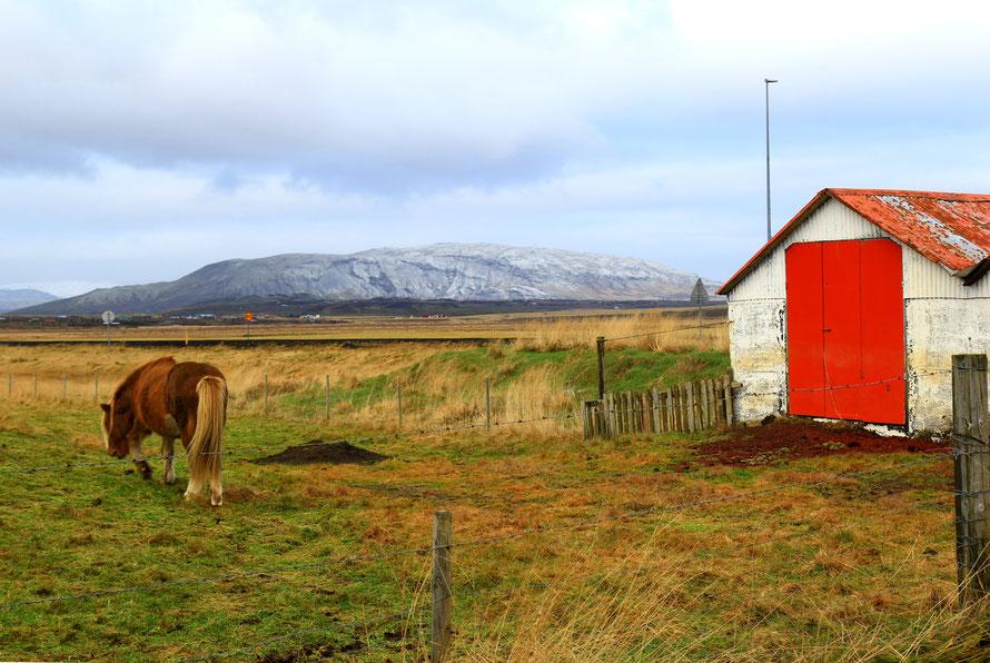 En route pour Gullfoss...traversée de la campagne islandaise