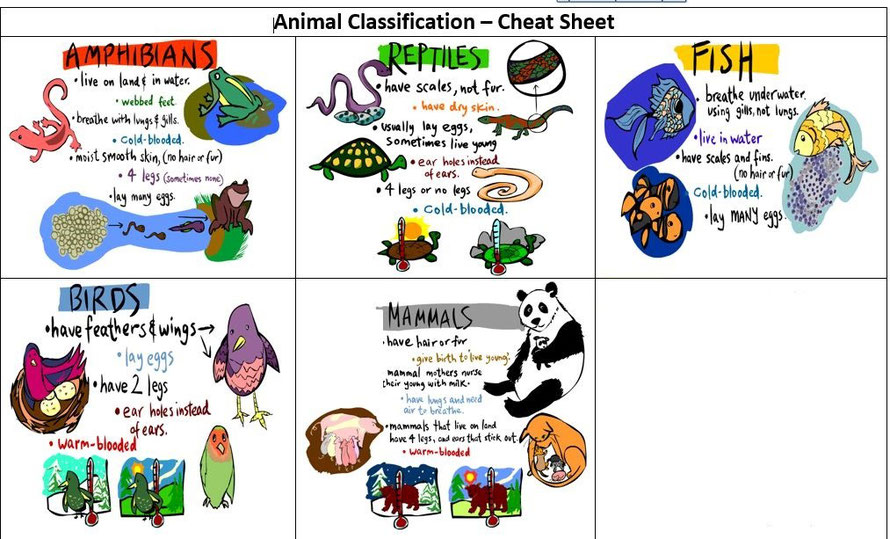 Animals classification Página web de triptoenglish