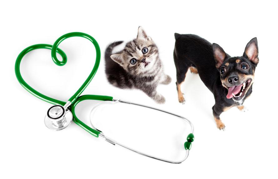 犬、猫、診察