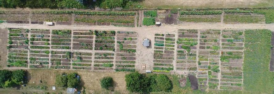Der Mikro Landwirtschaft Gemeinschaftsacker in Mannheim Feudenheim Mitte von Oben