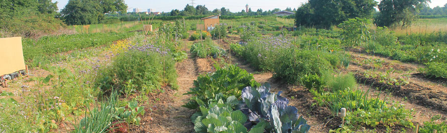 Mikro Landwirtschaft - gemeinschaftlicher Gemüseanbau