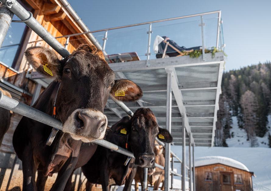 Bürli-Schiirli Hofbeiz, Bauernhof Wallis, Kuh, Hühner, Kälber, Milchproduktion, Ökowiese, Heu,