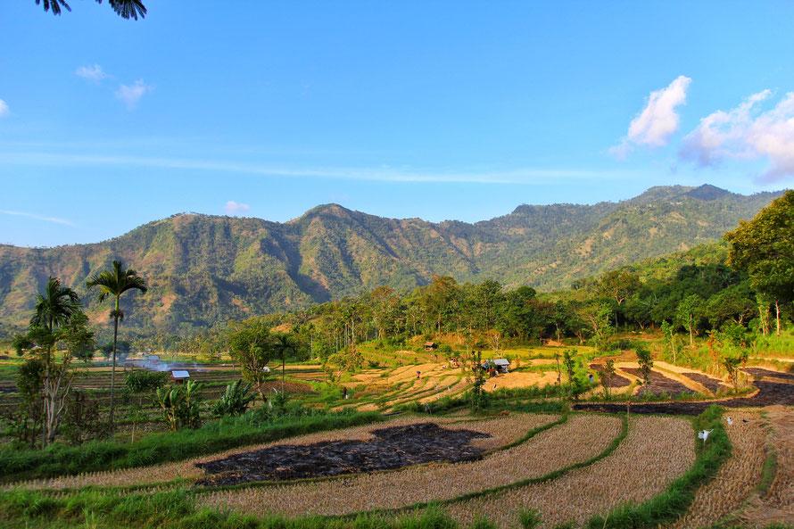 wunderschöne grüne Berge und eine traumhafte Reisterrassenlandschaft