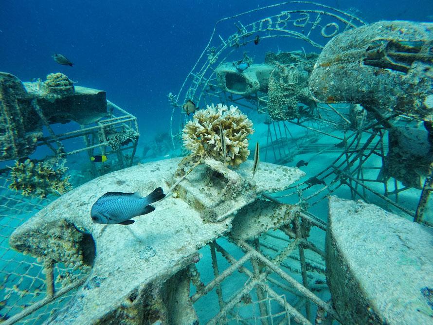 Mich erwartete die verrückteste Unterwasserwelt, die ich bisher beschnorchelt habe, sogar Motorroller waren unter Wasser