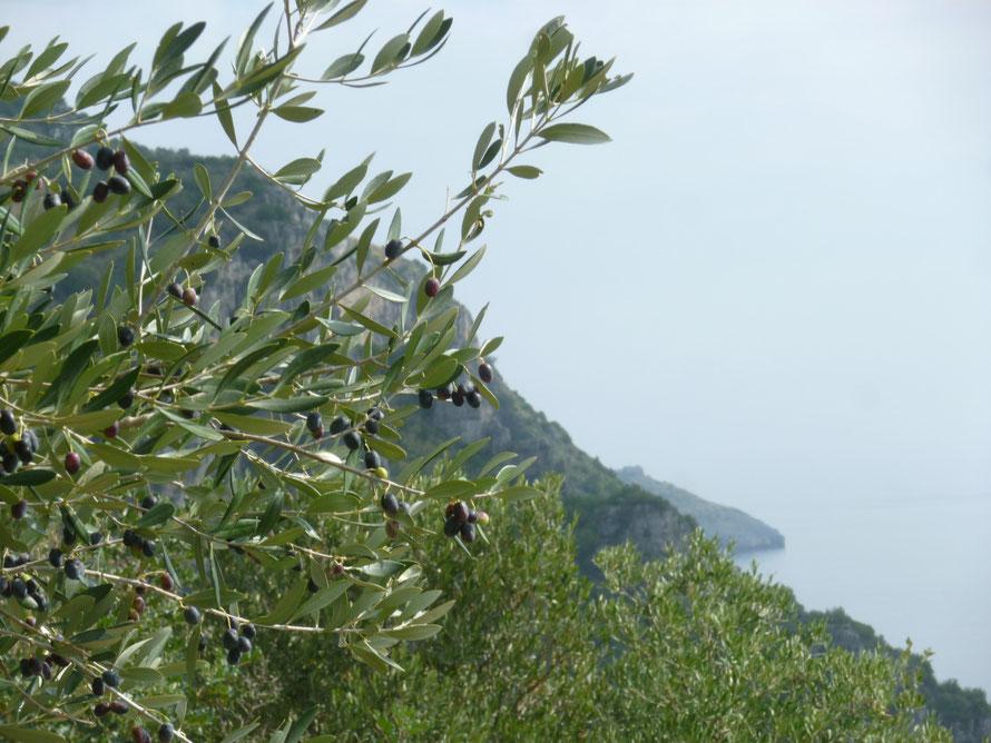 Einsame Küstenpfade mit Blick auf die naturgeschützte Zone der Infreschiküste