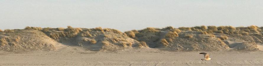 Geistheilungstag in den Niedrlanden, Holland, Geistheiler, Jesus Lopez, Maassluis