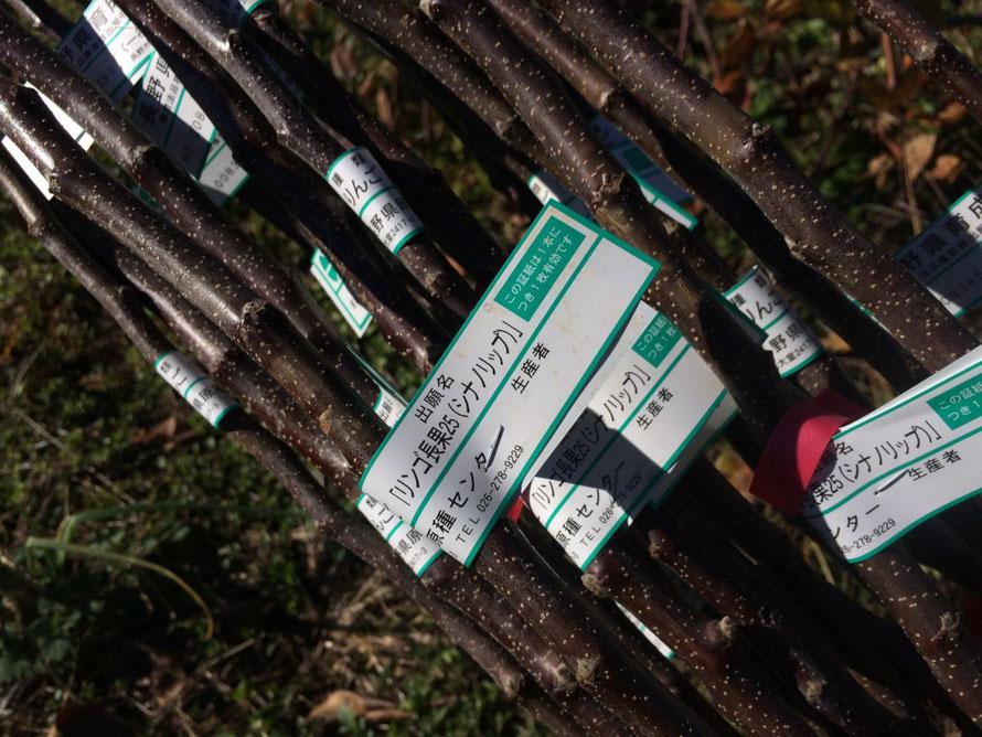 まるす小平果樹園で植え付けした苗木にもシナノリップの記載がありました