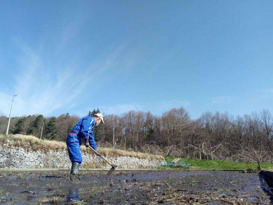 苗床作りはクワを使って人力作業です