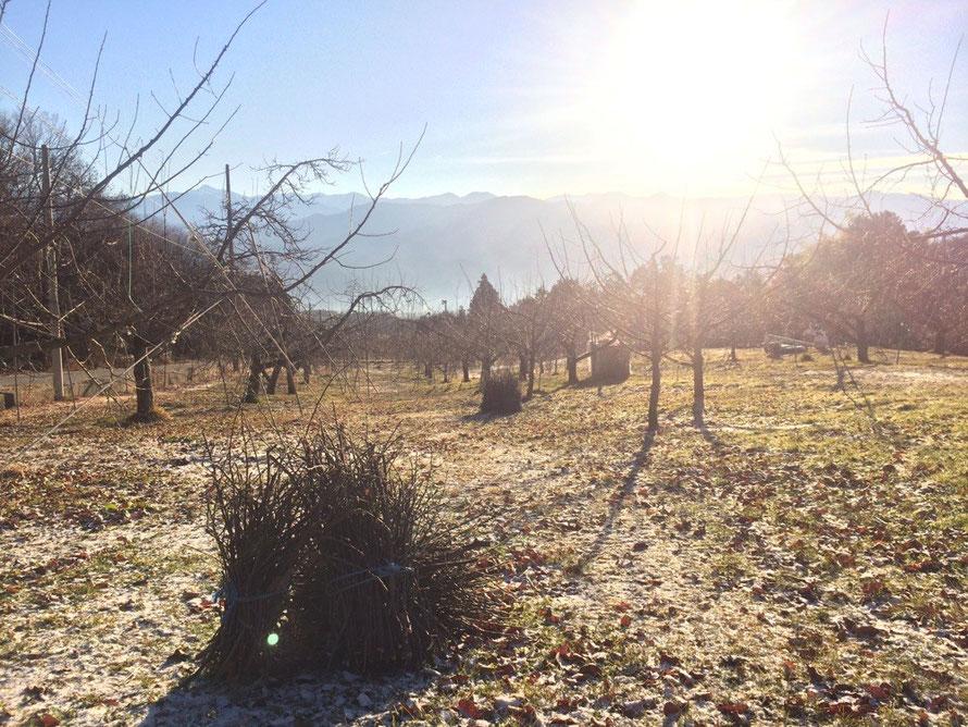 果樹園には落ち葉が広がり、秋の様な景色です。