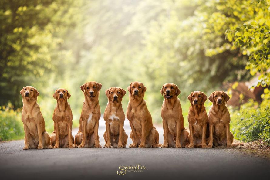 V.l.n.r.: Crannfieldlanes Amira (Nala), Amber, Almo (Spencer), Ashton (Theo), Armani (Hank), Askari, Affinity (Fiene) und Mama Huels' Hunters Hazel Leni