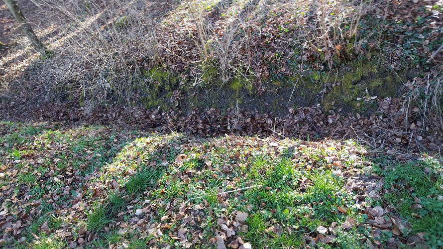 Der Graben am Waldrand