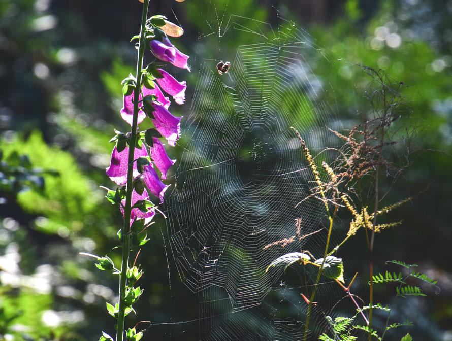 Eine tödliche Verlockung der Spinne.  Die Blüten im Sonnenlicht locken die Insekten an, die dann versehentlich ins Netz gehen, wenn sie nicht aufpassen. Ein Opfer hat die Spinne schon.