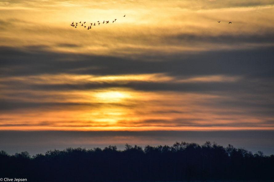 Zugvögel bei Sonnenaufgang im Hankhauser Moor