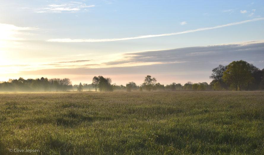Früh morgens im Hankhauser Moor bei Rastede